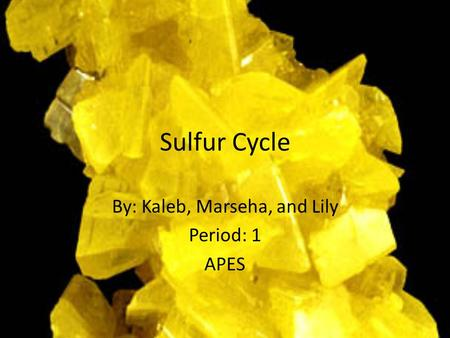 Sulfur Cycle By: Kaleb, Marseha, and Lily Period: 1 APES.