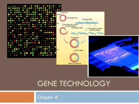 GENE TECHNOLOGY Chapter 8.