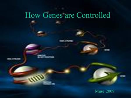 How Genes are Controlled Muse 2009. CONTROL OF GENE EXPRESSION.