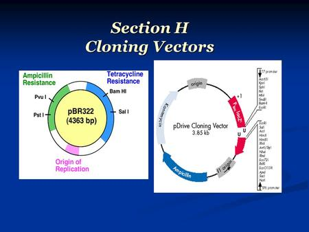 Section H Cloning Vectors.
