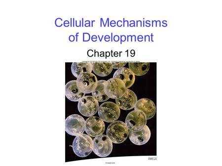 Cellular Mechanisms of Development Chapter 19. 2 Overview of Development Development is the successive process of systematic gene-directed changes throughout.