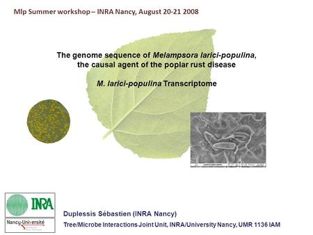 The genome sequence of Melampsora larici-populina, the causal agent of the poplar rust disease M. larici-populina Transcriptome Mlp Summer workshop – INRA.