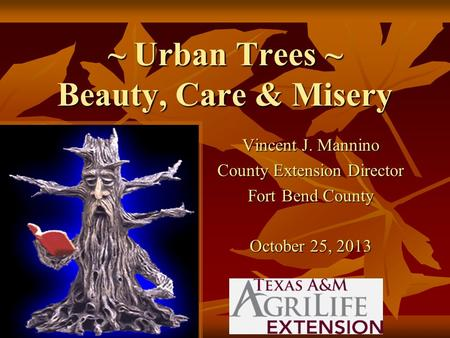 ~ Urban Trees ~ Beauty, Care & Misery