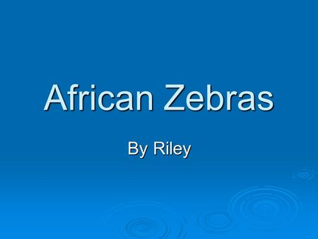 African Zebras By Riley Habitat  Found in East Africa  Live in woodlands and plains mainly on grasslands  thousands members in migrating herds.