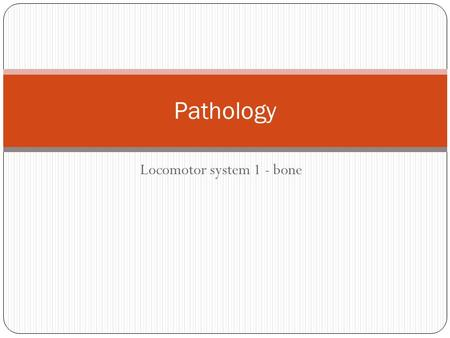 Locomotor system 1 - bone Pathology. Achondroplasia See the short and disproportionately thick bones.