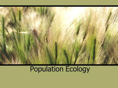 Population Ecology. 3 Fundamental Characteristics of a Population Density-number of individuals per unit area or volume Dispersion-pattern of spacing.