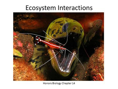 Ecosystem Interactions Honors Biology Chapter 14.