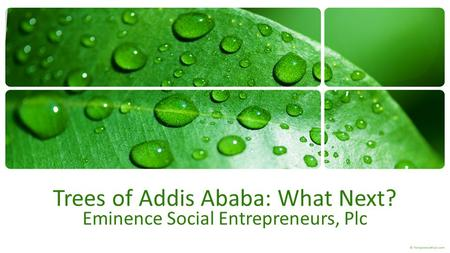 Trees of Addis Ababa: What Next? Eminence Social Entrepreneurs, Plc.