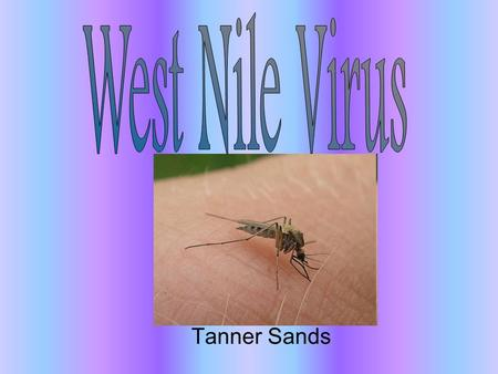 Tanner Sands. General Information It is part of the Flaviviridae family which is a family of viruses generally spread through arthropod vectors It is.