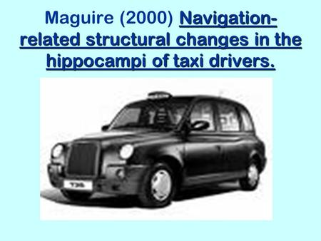 Maguire (2000) This study looks at the brains of London taxi drivers and examines the role of the hippocampus in helping them to navigate their way around.