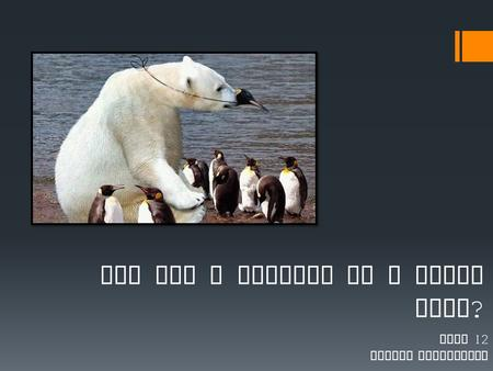 Are you a penguin or a polar bear ? Unit 12 Social Psychology.