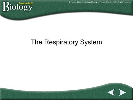 Go to Section: The Respiratory System. Go to Section: 37–3The Respiratory System A.What Is Respiration? B.The Human Respiratory System C.Gas Exchange.