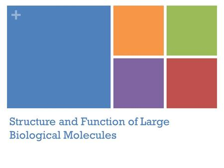 + Structure and Function of Large Biological Molecules.