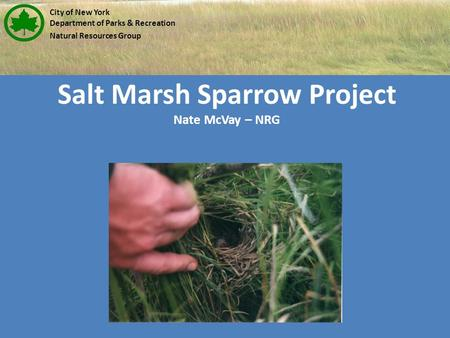 Salt Marsh Sparrow Project Nate McVay – NRG City of New York Department of Parks & Recreation Natural Resources Group.