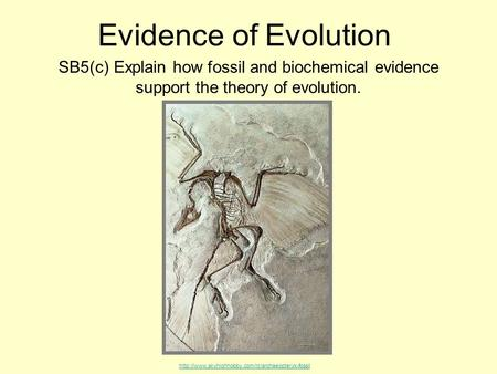 Evidence of Evolution SB5(c) Explain how fossil and biochemical evidence support the theory of evolution.
