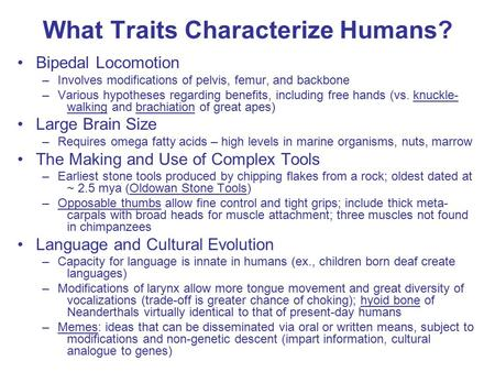 What Traits Characterize Humans? Bipedal Locomotion –Involves modifications of pelvis, femur, and backbone –Various hypotheses regarding benefits, including.