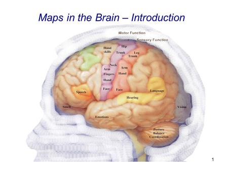 Basics of Computational Neuroscience What is computational