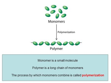 Monomer is a small molecule Polymer is a long chain of monomers The process by which monomers combine is called polymerization.