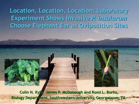 Location, Location, Location: Laboratory Experiment Shows Invasive P. insularum Choose Elephant Ear as Oviposition Sites Colin H. Kyle, James P. McDonough.