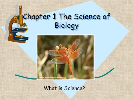 Chapter 1 The Science of Biology What is Science? Image from: research.amnh.org.