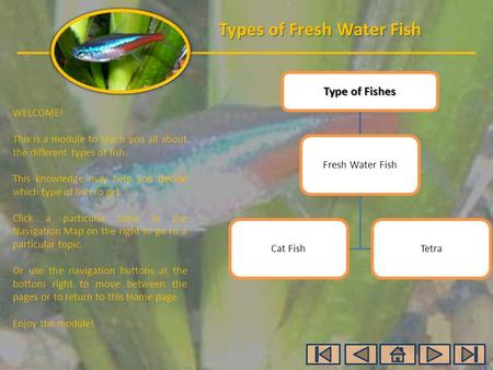 Types of Fresh Water Fish WELCOME! This is a module to teach you all about the different types of fish. This knowledge may help you decide which type of.