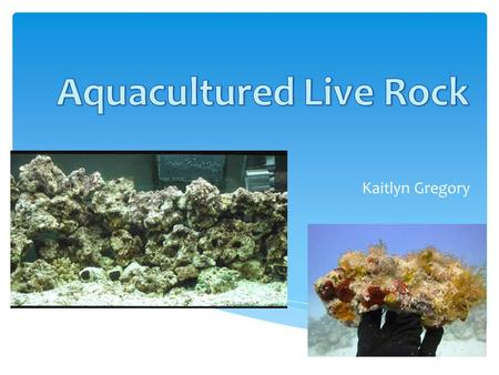 Kaitlyn Gregory.  Live rock is not alive, it's based off of the things living on it.  Used in reef tanks  Named based on where it is found  It is.