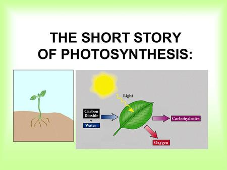 THE SHORT STORY OF PHOTOSYNTHESIS:. Photosynthesis converts light energy to chemical energy. (glucose + fructose = sucrose)