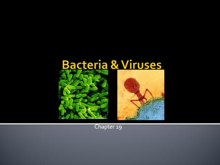 Chapter 19.  Microscopic life covers nearly every square centimeter of Earth.  All bacteria are prokaryotes.  Classifying Prokaryotes  Prokaryotes.