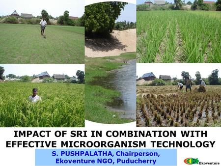 S. PUSHPALATHA, Chairperson, Ekoventure NGO, Puducherry IMPACT OF SRI IN COMBINATION WITH EFFECTIVE MICROORGANISM TECHNOLOGY.