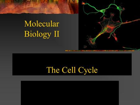 The Cell Cycle Molecular Biology II. The Life Cycle of Cells The Cell Cycle Follows a Regular Timing Mechanism. Newly born cells grow and perform their.