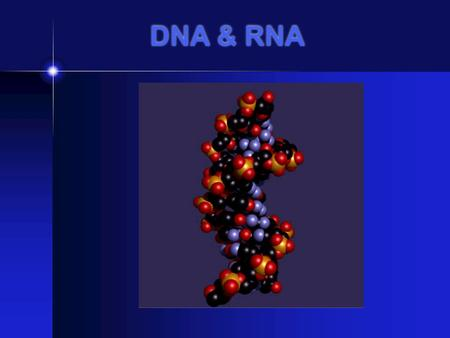 DNA & RNA DNA STRUCTURE Double Helix Phosphate ( PO4) Deoxyribose sugar Nitrogen Bases: A- adenine, C-cytosine, T-thymine, G-guanine.