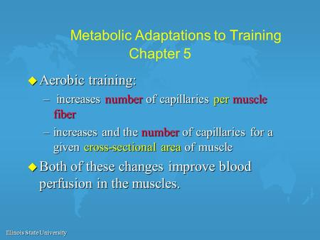 Illinois State University Metabolic Adaptations to Training Chapter 5 u Aerobic training: – increases number of capillaries per muscle fiber –increases.