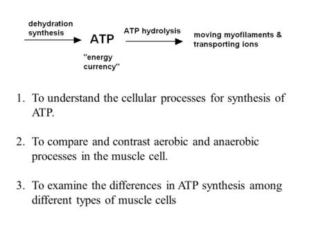 To understand the cellular processes for synthesis of ATP.