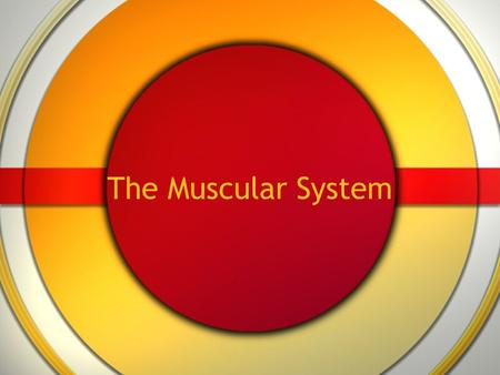 The Muscular System. 3 kinds of muscle All have cells specialized to contract for movement.