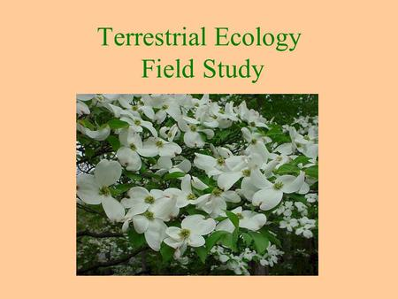 "Terrestrial Ecology Field Study. Our Ecology Activity: A Terrestrial Site Study Ecology ""oikos"" = Home The study of land- based communities Environmental."