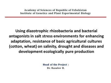 Using diazotrophic rhizobacteria and bacterial antagonists in salt stress environments for enhancing adaptation, resistance of basic agricultural cultures.