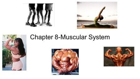 Chapter 8-Muscular System. Case Study # 1 Signs and Symptoms: -Respiratory Acidosis -Accelerated oxygen consumption -Extreme heat production Case Study.