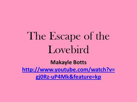 The Escape of the Lovebird Makayle Botts  gj0Rz-uP4Mk&feature=kp  gj0Rz-uP4Mk&feature=kp.