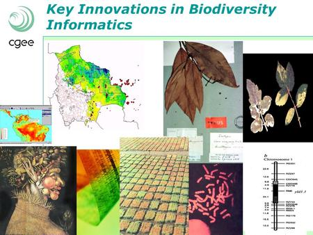Key Innovations in Biodiversity Informatics. Opportunities (and challenges) for biodiversity information management in Brazil Biggest biodiversity in.