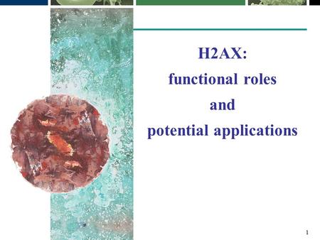 1 H2AX: functional roles and potential applications.