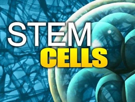 What is a STEM CELL? Unspecialized cells: can become any type of cell in the body Serve as the body's repair system Renew and Replenish other cells.