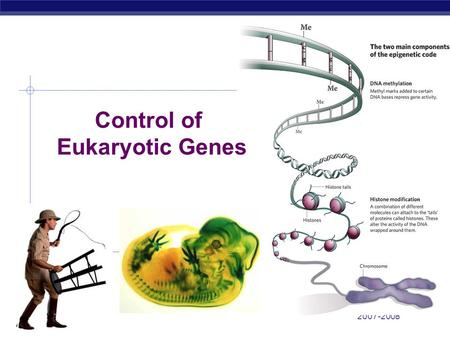 ap bio essay gene regulation Ap bio- regulation 1: genetics- systems perspectives provided under the terms of a creative commons attribution-noncommercial-sharealike 30 unported license by david knuffke.