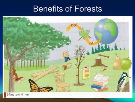 Benefits of Forests. Enjoyable forest walks and woodland trails. Woodland and Forests provide habitats for insects and animals. Renewable source of fuel.