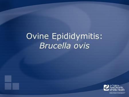 Ovine Epididymitis: Brucella ovis. Overview Organism History Epidemiology Transmission Disease in Animals Prevention and Control Actions to Take Center.