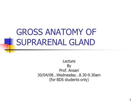 1 GROSS ANATOMY OF SUPRARENAL GLAND Lecture By Prof. Ansari 30/04/08…Wednesday…8.30-9.30am (for BDS students only)