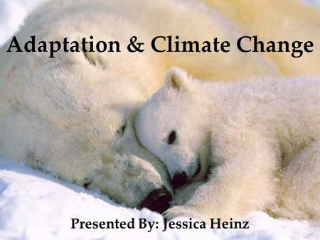 Adaptation & Climate Change Presented By: Jessica Heinz.