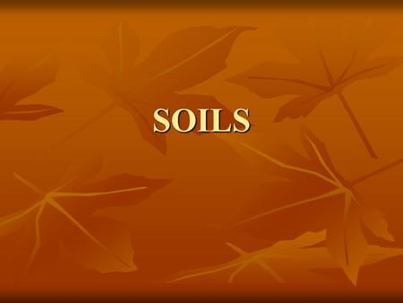 SOILS What is Soil?? Soils are the transition between the biotic and abiotic worlds. Soil is a mixture of: 1. Minerals 2. Water 3. Gases 4. HUMUS-Dead.