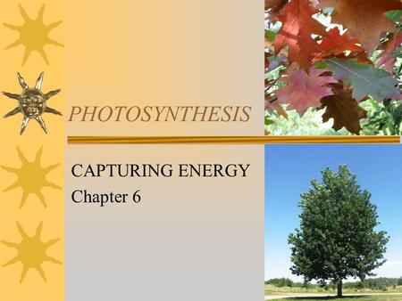 PHOTOSYNTHESIS CAPTURING ENERGY Chapter 6. ENERGY  Autotrophs – Organisms that make their own food from inorganic substances and energy (ATP). –Use photosynthesis.