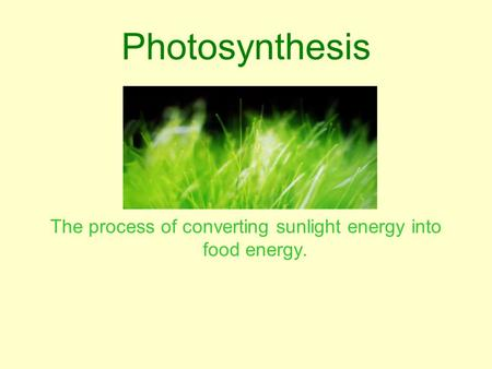 Photosynthesis The process of converting sunlight energy into food energy.