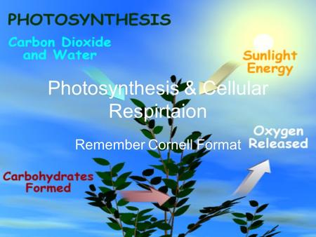 Photosynthesis & Cellular Respirtaion Remember Cornell Format.